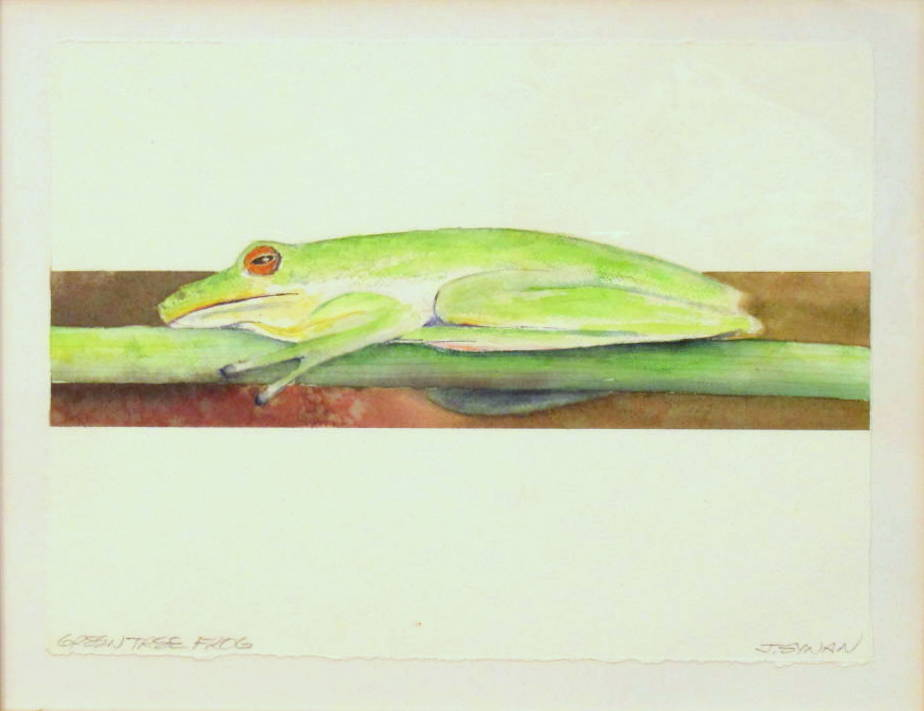 14 x 20 Green Tree Frog